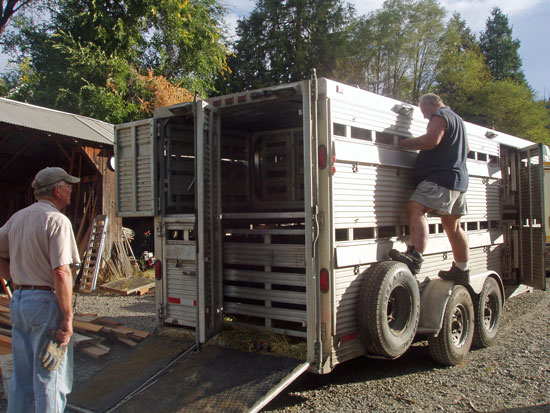 Ron Keener and his sheep trailer